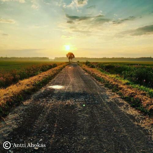 kuvassa tie ja puu keskellä peltoa