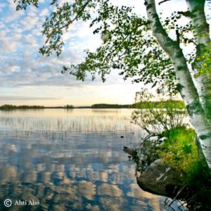 Kuvassa järvenrantamaisema