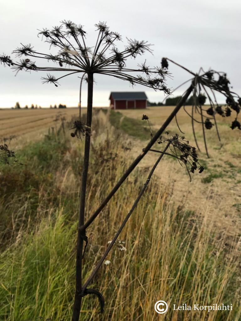 Kuvassa syksymaisemaa ja talo horisontissa